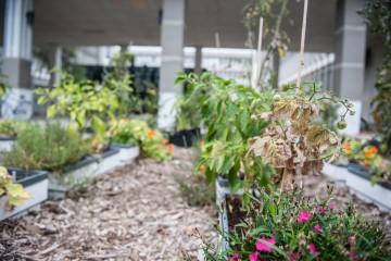 Jardin des comestibles - Alice Chiche-1