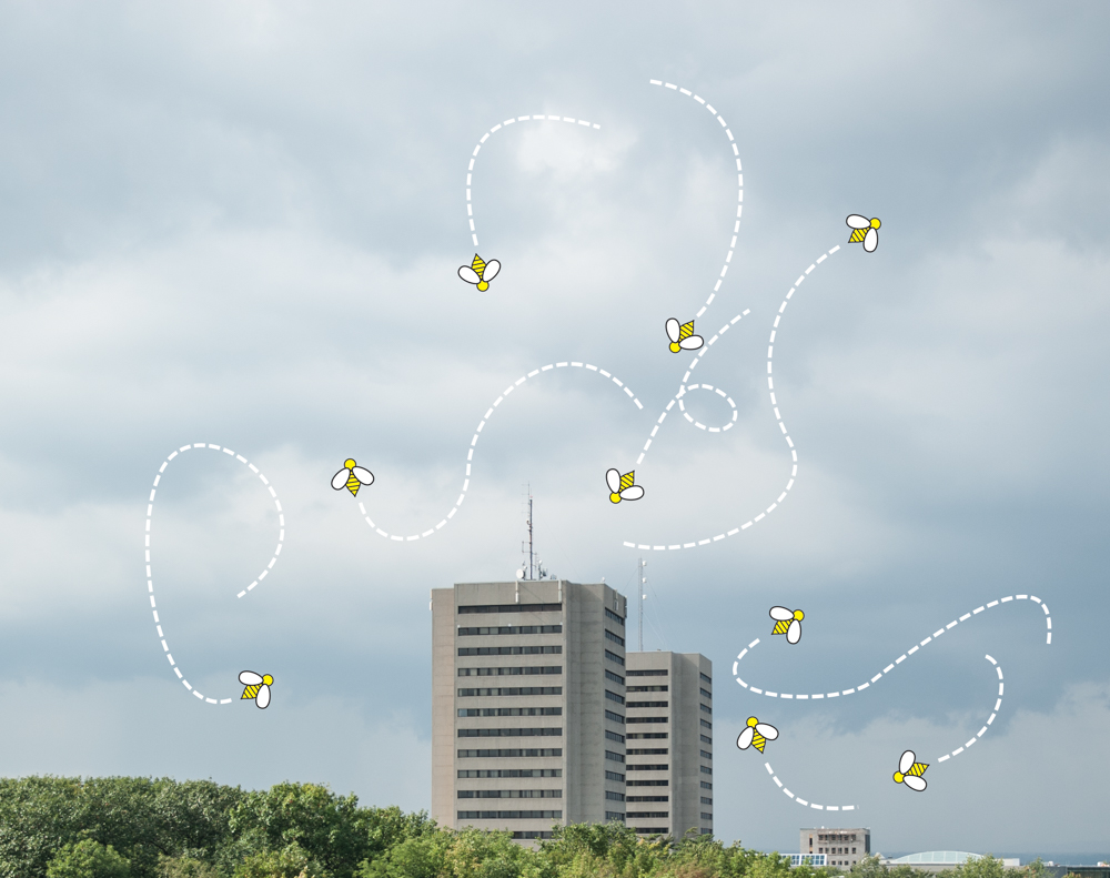 Campus et abeilles - Alice Chiche-3